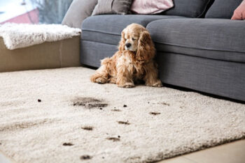 dog on carpet
